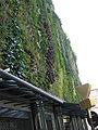 Mur vegetal avignon jour3.jpg
