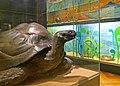 Musée zoologique de Strasbourg-Tortues (2).jpg