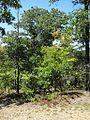 NBFSP Camden TN 2012-07-28 019.jpg