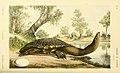 Natural history of Victoria (5998290657).jpg
