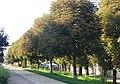 Naturdenkmal 674 GuentherZ 2011-08-31 0085 Wien02 Obere Augartenstrasse Rosskastanienreihe.JPG