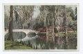 Nature's Mirror, Magnolia on the Ashley, Charleston, S. C (NYPL b12647398-73892).tiff