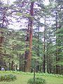 Nature beauty himachal pradesh , india.jpg