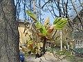 Nature in Smolensk - 03.jpg