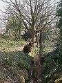 Nea Meadows, stream - geograph.org.uk - 1213045.jpg