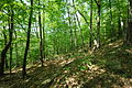 Niagara Escarpment Forest in Wisconsin -a.jpg