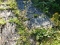 Niedermunster 091.JPG
