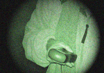 Ghost hunters taking an EMF reading which proponents say may show evidence of ghosts.