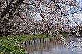 Nizaemon Shinden, Tsukubamirai, Ibaraki Prefecture 300-2405, Japan - panoramio.jpg