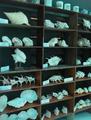 Nova shell museum, Bohol.png