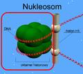 Nukleosom+ramka.png