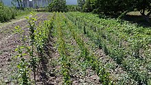 Plant Nursery Wikipedia
