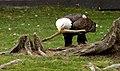 Oaklawn Farm Zoo, May 16 2009 (3539711224).jpg