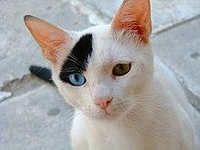 A picture a cat