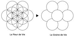 Fleur De Vie Wikipedia