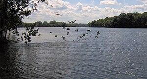 Bledsoe Creek State Park - Old Hickory Lake's Bledsoe Creek embayment