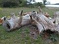 Old Fallen Logs - geograph.org.uk - 1099911.jpg