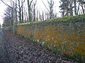 Orange Lichen (Raby Estate Boundary Wall ) - geograph.org.uk - 1605962.jpg