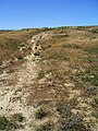 Oregon Trail ruts - Boardman Bombing Range Oregon.jpg