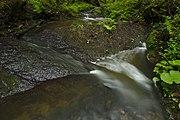 Přírodní rezervace Kavinský potok (17).jpg