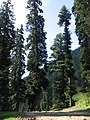 Pahalgam views 53.JPG
