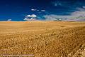 Palouse hills - 9856.jpg