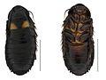 Panesthia guizhouensis nymph.jpg