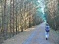 Papenberge - Uferpromenade (Lakeside Walk) - geo.hlipp.de - 41663.jpg