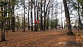Park Miejski w Bielawie.jpg