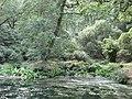 Park Wood - geograph.org.uk - 522894.jpg