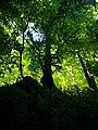 Park prirode medvednica.jpg