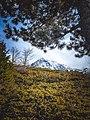 Parku Kombëtar Sharri me borë.jpg