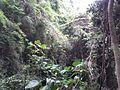 Parque Nacional Waraira Repano, Caracas..jpg