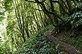 Path to the waterfall. - panoramio.jpg
