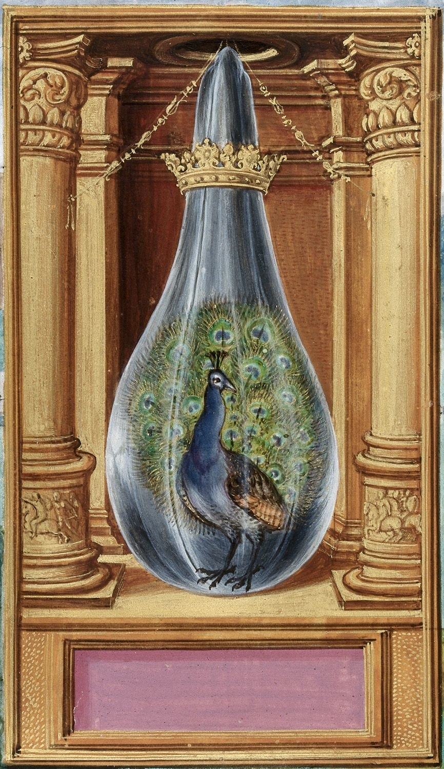 Peacock from BL Harley 3469