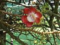 Penang Botanic Gardens (2).JPG