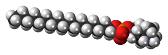 Perifosine - Image: Perifosine zwitterion 3D spacefill