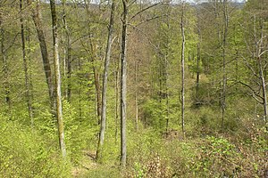 Frankenweide - The wooded countryside of the Frankenweide in spring