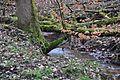 Pflaumbach im Wald bei Radheim.jpg