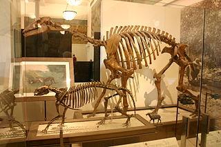 Litopterna Extinct order of mammals