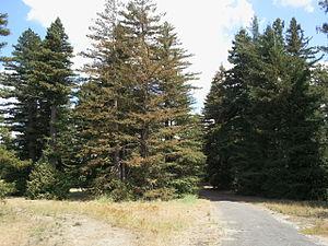 Pialligo, Australian Capital Territory - Pialligo Redwood Forest looking south