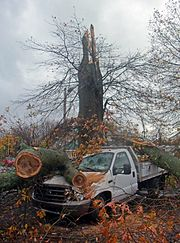 Pickup truck damaged by downed oak tree during Hurricane Sandy, Montgomery, NY.jpg