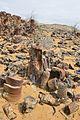 Pieces of fossilized trees in Jaraquduq.jpg