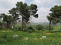 PikiWiki Israel 51946 galilee view.jpg