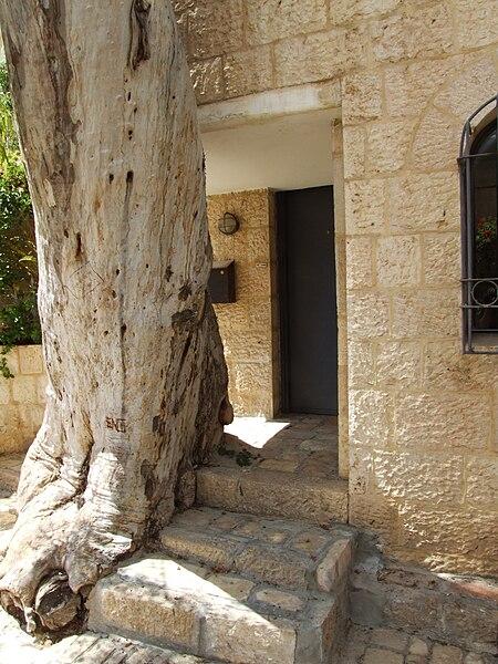 בית ועץ או עץ ובית