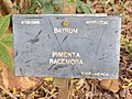 Pimenta Racemosa - Plaque.jpg