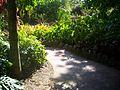 Pinecrest Gardens FL park path04.jpg