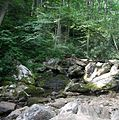 Pisgah National Forest (creek running across Farlow Gap Trail).jpg