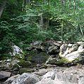 Pisgah National Forest (creek running across Farlow Gap Trail).jpg