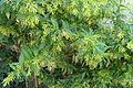 Plant of blade55.JPG